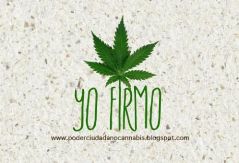 Yo-Firmo-Cannabis-490x335